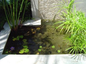 Feature-Pond2